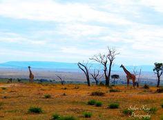 African Giraffe, Change, Mountains, Canning, Nature, Travel, Naturaleza, Viajes, Destinations