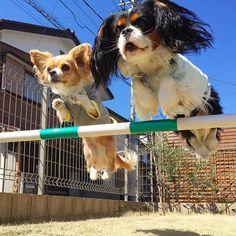 Suama - ♪ jump !