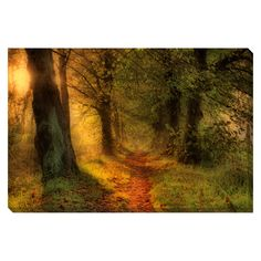 The Path Less Taken II Oversized Gallery Wrapped Canvas - Overstock™ Shopping - Top Rated Canvas