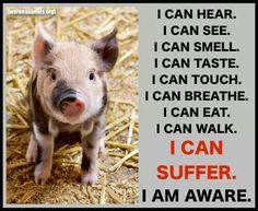Do animals suffer less because they have no words? I think not! Mon Combat, Vegan Quotes, Vegetarian Quotes, Vegan Memes, Karten Diy, Why Vegan, Stop Animal Cruelty, Vegan Animals, Sayings