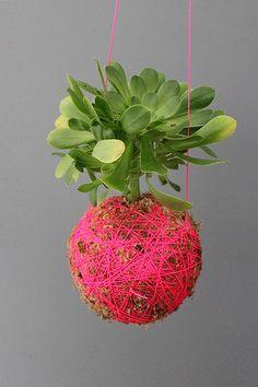 Mister Moss | Hanging plants | Kokedama | Homewares | INDOOR PLANTS