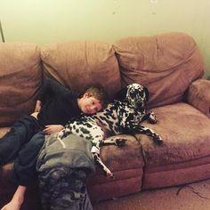Snuggle time #dalmatian #dogsofinstagram #fridaynightfamilynight