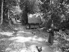 Old Lady in The Wood. Baduy, West Java, Indonesia