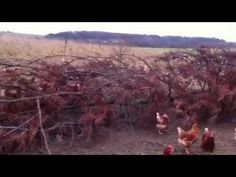 Here are our girls on The Happy Egg farm playing with their very own Christmas tree. Here at happy eggs we don't agree with standing still, that's why we con. Camera Phone, Merry, Eggs, Videos, Happy, Egg, Camera, Video Clip, Egg As Food