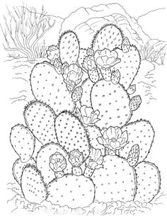 Free Printable Cactus Coloring Pages For Kids is part of Free adult coloring pages - Having a unique shape and texture, Cactus is the only plant that can survive in the arid and intense regions like desert Coloring Pages For Teenagers, Free Adult Coloring Pages, Flower Coloring Pages, Coloring Book Pages, Coloring Pages For Kids, Kids Coloring, Mandala Coloring, Cactus Drawing, Cactus Art