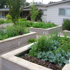 raised beds made with CMU block, stucco finish with precast double bullnose cape