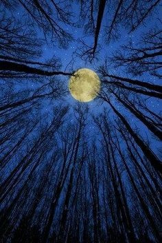 The moon moves me deeply. I feel connected to the night and the moon is always beautiful to me. I even tattooed a crescent moon on the inside of my wrist. Foto Nature, Ciel Nocturne, Shoot The Moon, Beautiful Moon, Beautiful Nature Photos, Amazing Nature, Beautiful Places, Blue Moon, Moon Moon