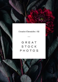 Nubby Twiglet   Creative Chronicles: The 3 Best Places To Find Stock Photos