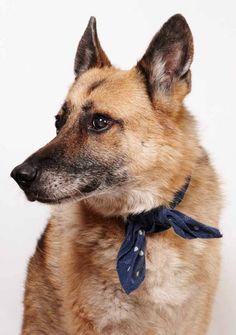 He's a good big dog with a bandana