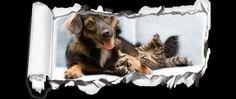 diere | , Gauteng | Dieregesondheid