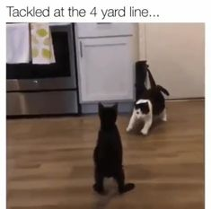 ATTENTION: NFL defensive backs. watch the black and white cat! ATTENTION: NFL defensive backs. watch the black and white cat! Funny Animal Memes, Funny Animal Videos, Cute Funny Animals, Funny Animal Pictures, Cat Memes, Funny Cats, Animal Humor, I Love Cats, Crazy Cats