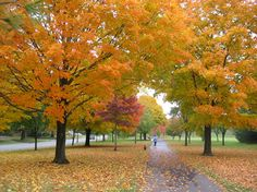 About Upper Arlington: Thompson Park in the fall
