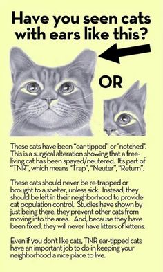 Ear tipped or notched ear means cat has been spayed/nuetered