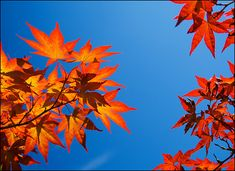 Complementary colors | Umberto Nicoletti | Flickr