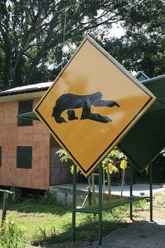 Sloth Crossing - Near Cahuita Ntnl Park, Costa Rica