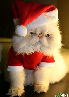 animals that dont suck 42 photos christmas animalschristmas catschristmas