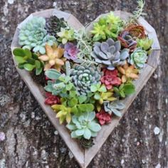 Succulent Heart Living Vertical Planter | Etsy