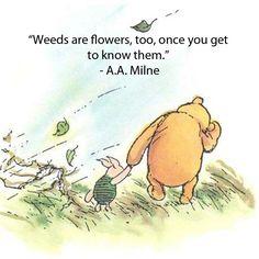 pooh weeds