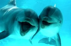 dolphins smiling for the camera