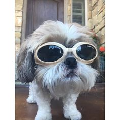 Doggles http://ift.tt/2hgiJWK