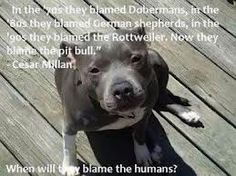 PLEASE SIGN PETITION TO ... End BSL on Pitbulls in Ontario: End the BSL AND SHARE!!! http://www.change.org/petitions/end-bsl-on-pitbulls-in-ontario-end-the-bsl#share Pit bulls are one of the most lovable breed of dogs, I trust them more than a shitzu. They did it german sheperds, rottweilers and dobermans now to the pit bulls, when will they blame the bad owners ?