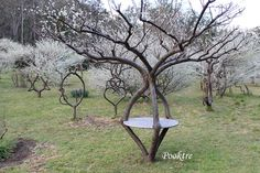 The Art of Tree Shaping – love this! Re-pinned by Elizabeth Dean / u & i garden
