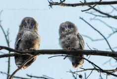 #wildlife #photography #birds #owls