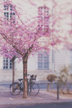 Spring in Paris. A lovely square in with trees in bloom. This vintage bicycle adds so much charms to the photo. Beautiful and magical! Natur Wallpaper, Pretty Pictures, Spring Time, Pretty In Pink, Art Photography, Beautiful Places, Beautiful Flowers, Scenery, Photos