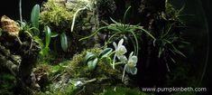 White Orchid BiOrbAir Terrarium Trial (part ten) - Pumpkin Beth