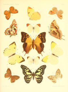 Abt. 1 - Lepidopteren von Madagascar. - Biodiversity Heritage Library