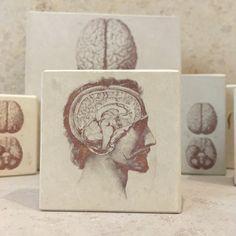 minilitos de piedra con litografias de anatomia. Disección de la cabeza. #anatomy