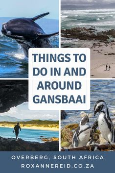 Things to do in and around Gansbaai, from whale-watching and shark cage diving, a penguin sanctuary and more Amazing Destinations, Travel Destinations, Stuff To Do, Things To Do, Shark Cage, All About Africa, Wildlife Safari, Responsible Travel, Slow Travel