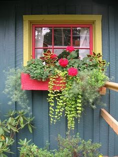 Container Gardening Ideas Plants For Window Boxes 22 - 26 Simple But Beautiful Plants For Window Boxes Window Box Plants, Window Planter Boxes, Planter Ideas, Balcony Window, Shade Plants, Cool Plants, Green Plants, Coleus, Flower Window