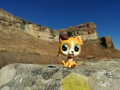 Scamp's day out (FTLPS)