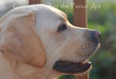 Note Card YELLOW LABRADOR Smiles at Sunset by overthefenceart
