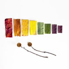 Rainbow Leaf Xylophone, Photographic Print