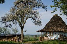 Wildventure.ro - Aventuri în România rurală - Fabrika de Case Gazebo, Camping, Outdoor Structures, Plants, Restaurants, Hotels, Holidays, Houses, Campsite
