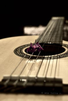 Acoustic Guitars – Page 7 – Learning Guitar Acoustic Guitar For Sale, Acoustic Guitar Lessons, Guitar Songs, Ukulele, Acoustic Guitars, Acoustic Music, Guitar Photography, Still Life Photography, Guitar Posters