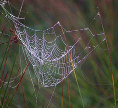 by Oakjack, via Flickr
