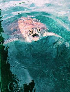 Most recent Free of Charge turtles pet aesthetic Ideas Children employ a pure desire for the earth all over all of them, therefore it's no surprise the reason why Cute Creatures, Sea Creatures, Beautiful Creatures, Animals Beautiful, Cute Baby Animals, Animals And Pets, Funny Animals, Orcas, Cute Turtles
