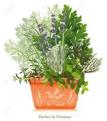 fotos pinterest plantas aromaticas vintage - Cerca amb Google