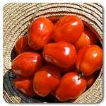 Vigorous and strong, producing heavy yields of picture-perfect, thick-walled plum tomato fruit with deep red color and mild flavor. A good choice for a commercial variety, as well as in the home garden. Fruits average 4-6 oz.