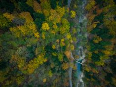 Aerial view of Divje JEzero or Wild Lake in Slovenia thick fores Lake Painting, Drone Photography, Slovenia, Aerial View, Inspiration, Image, Beautiful, Art, Biblical Inspiration