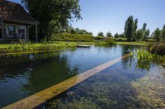 This unique photo is absolutely an impressive design philosophy. Backyard Pool Designs, Ponds Backyard, Pool Landscaping, Natural Swimming Ponds, Natural Pond, Swimming Pool House, Swimming Pools, Building A Pond, Fiberglass Pools