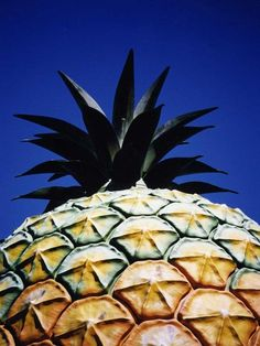 The Big Pineapple, Nambour, Queensland  You're the one who wanted to see it...