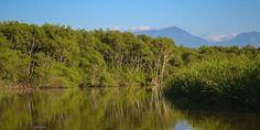 Baía de Guanabara ainda tem vida selvagem preservada