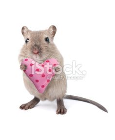 Mouse holding a heart shaped cushion Royalty Free Stock Photo
