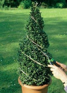 How to trim decorative shrubs by giving them special shapes – Practical ideas Topiary Plants, Topiary Garden, Topiary Trees, Garden Plants, Topiary Decor, Boxwood Landscaping, Boxwood Garden, Front Yard Landscaping, Formal Gardens