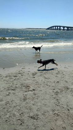 Dog friendly beach for Rosie Longport NJ