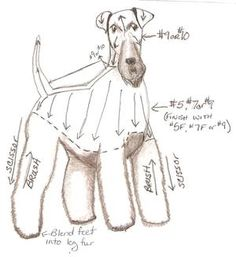 Airedale terrier on Pinterest | Welsh Terrier, Sleep ...